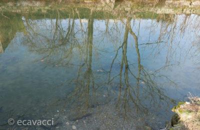 alberi riflessi nel Martesana