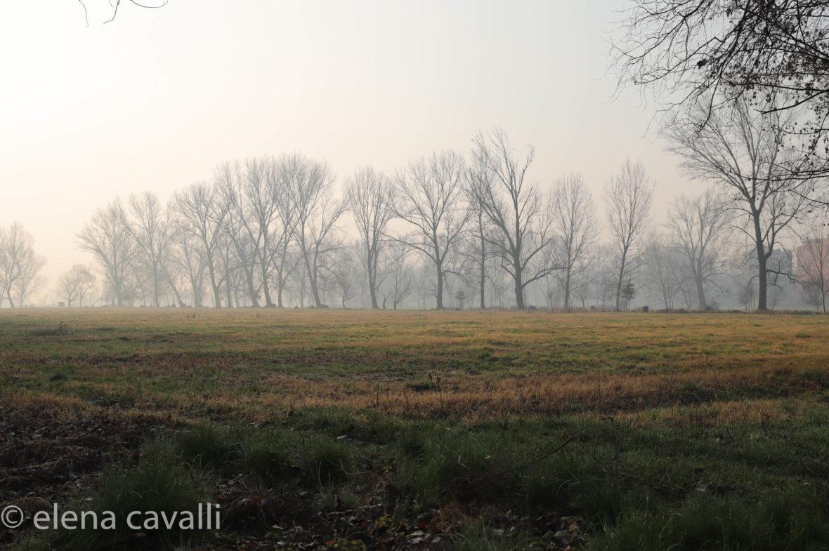 prato nel parco del Ticinello anche a Milano città di campagna