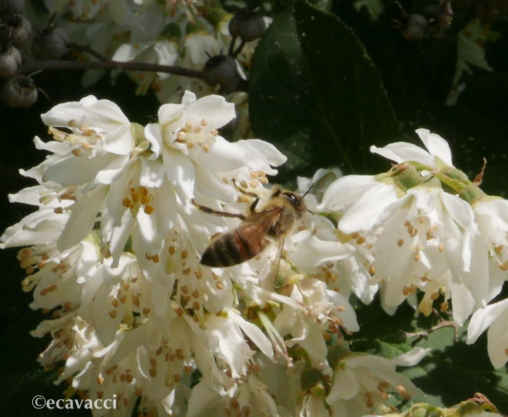 in giardino ape sul fiore