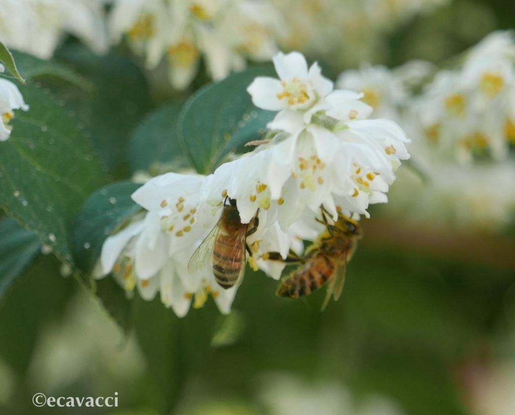 due api sul fiore