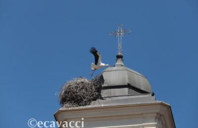 cicogna bianca che vola