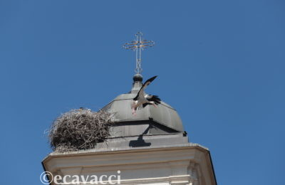 cicogna che vola