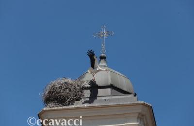 mamma cicogna lascia il nido