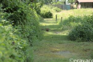 coniglio selvatico al parco vicino milano