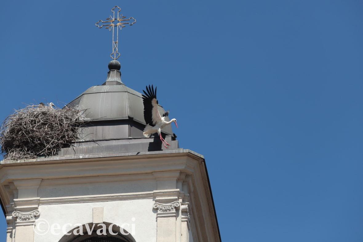 cicogna sul campanile di una chiesa