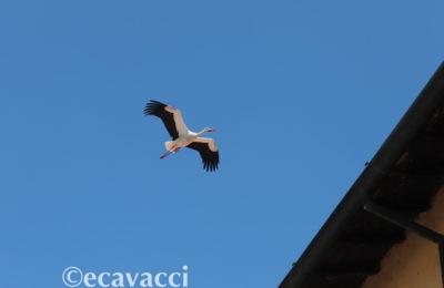 volo di cicogna in cielo durante la giornata mondiale dell'ambiente