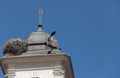 cicogna atterra su un campanile