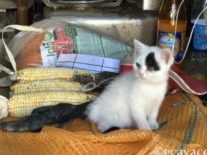 bellissimo-gattino